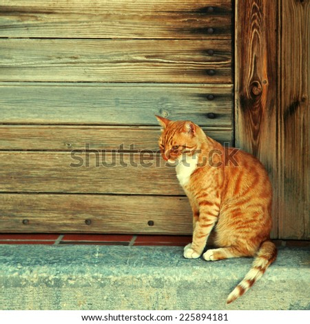 Greek red cat  in wood doorway at the old greek village (Crete, Greece). Instagram effect - stock photo