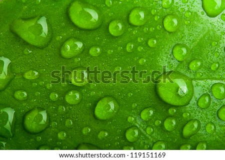 green abstract background. drops of dew on a leaf macro - stock photo