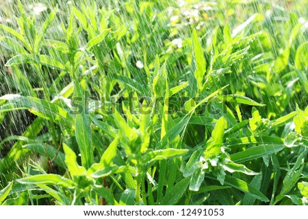green abstract background water splash spraying garden