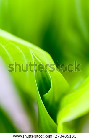 Green, abstract composition with leaf texture and soft focus