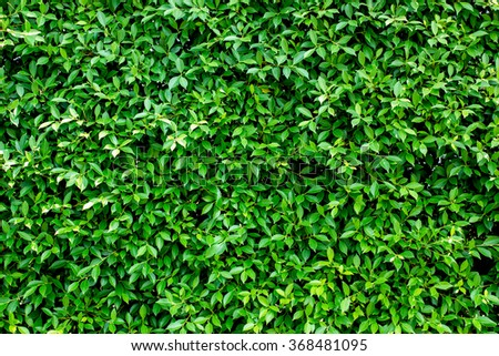 Green abstract wall background / green leaves wall texture