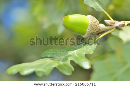 green acorn and leaves on natural background - stock photo