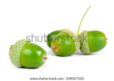 green acorn fruits isolated on white background - stock photo