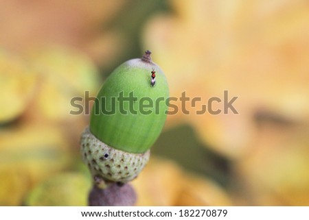 Green acorn on a background of yellow leaves - stock photo
