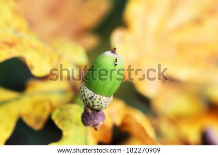 Green acorn on a green background - stock photo