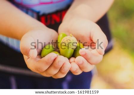 Green acorns in child hands - stock photo