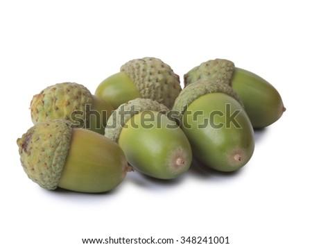 Green acorns on a white background      - stock photo