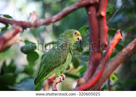 Green African parrot perched