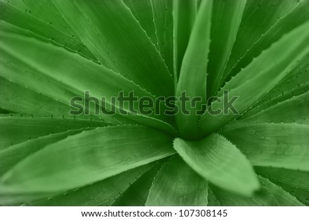 Green Agave Tree in Garden