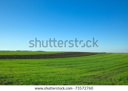 Green agricultural field with clear blue sky - stock photo