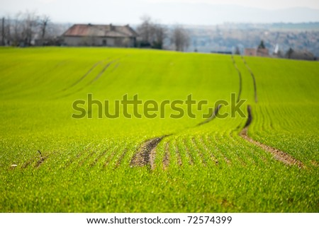 Green agricultural field with shallow DoF - stock photo