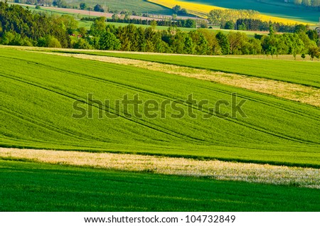 Green agricultural scenery during the spring - stock photo