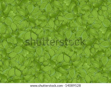 green agriculture background, young growth - stock photo