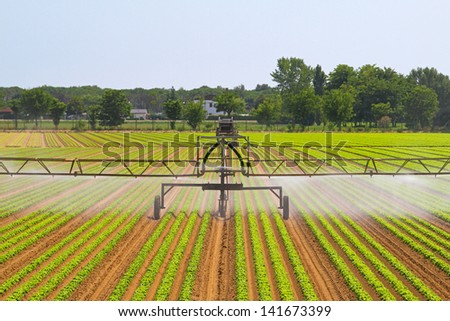 Green agriculture field with water irrigation system - stock photo