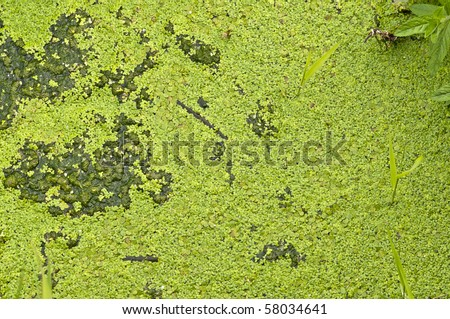 green algae growth