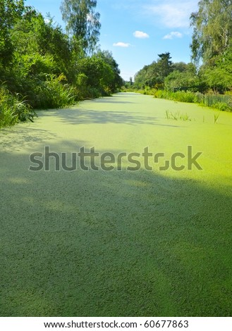 Green algae growth on the water. - stock photo