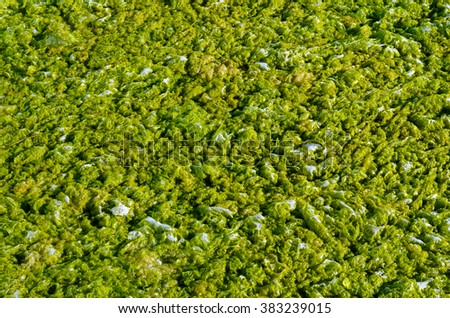 Green algae with water foam texture background