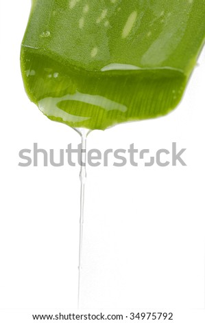 Green aloe leaf with juice droplet - stock photo
