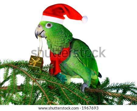 Green amazon parrot holding a golden gift parcel - stock photo