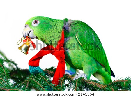 Green amazon parrot with a golden bell sitting on a Christmas tree - stock photo