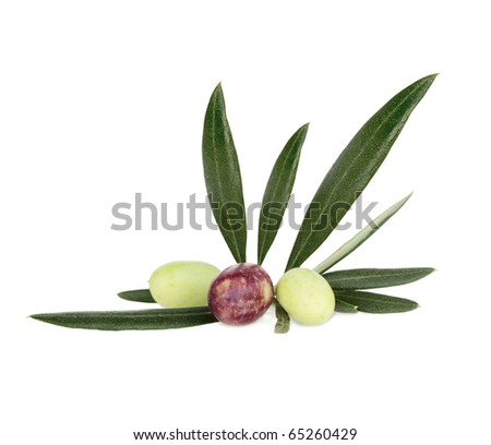 Green and Black Olives on branch Isolated On White