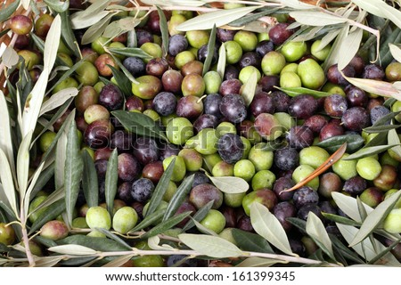 Green and black olives with a frame of branches and leaves of olive tree - stock photo