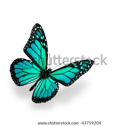 Green and Blue Vivid Butterfly Isolated on White. Soft shadown undernath. - stock photo