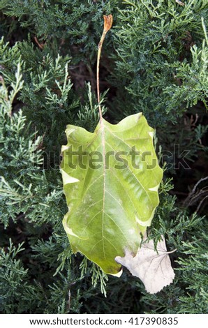 Green and dry leaves - stock photo