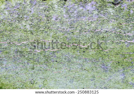 Green and grey textures of wood bark - stock photo