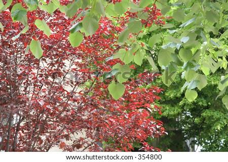 Green and red leaves - stock photo