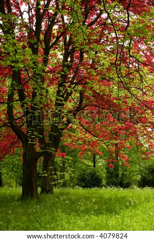 green and red tree - stock photo