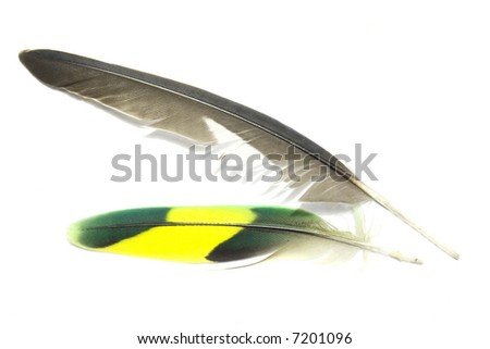 Green and yellow and grey feathers with white background 1