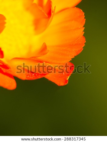 green and yellow floral bokeh - stock photo