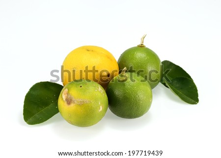 green and yellow  Lemon on white background