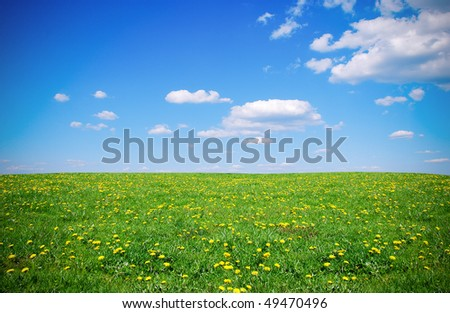 Green and yellow meadow - stock photo