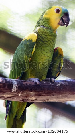 Green-and-yellow parrot sitting on a thick branch, Iguazu, Brazil - stock photo
