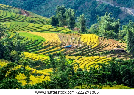Green and yellow rice terraces of the H'Mong ethnic people in Lao Cai, Vietnam. - stock photo