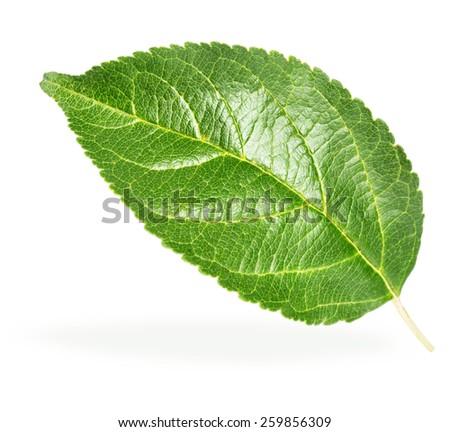 Green apple leaf  - stock photo