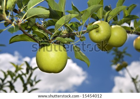 green apple on branch against blue sky - stock photo