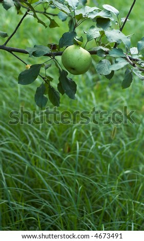 green apple theme with space left for text - stock photo