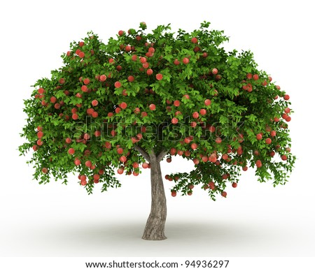 Green Apple tree full of red apples isolated over white - stock photo