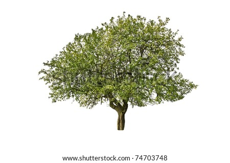 green apple tree isolated on white - stock photo