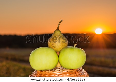 Green apples in a ripe pear.