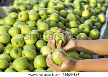 Green apples in the market - stock photo