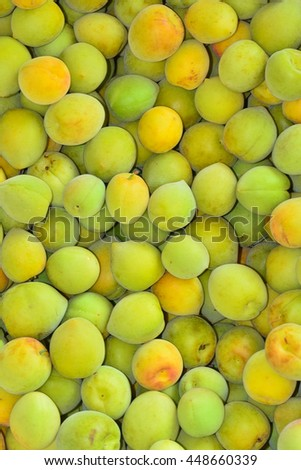 Green apricot fruits.