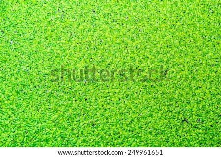 Green aquatic plant ecology of the fish. - stock photo