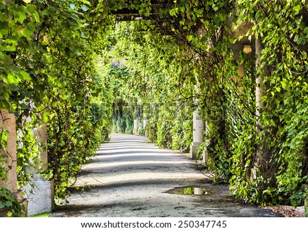 Green archway in the park at summer - stock photo