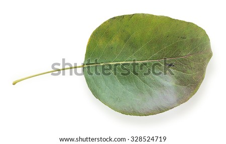 Green autumn leaf isolated on a white background