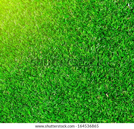 Green background of football field grass texture with sunny vivid yellow rays of first spring sun in shiny day outdoor - stock photo