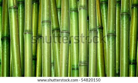 green background of fresh hard chinese bamboo - stock photo